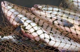 Под Феодосией пограничники поймали рыбака-браконьера