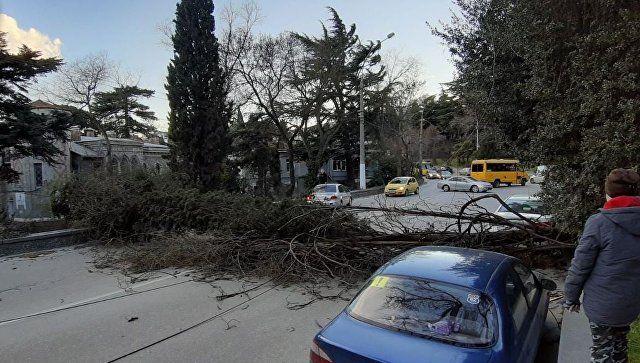 Шторм разбушевался: на ЮБК ветер валит деревья и срывает крыши