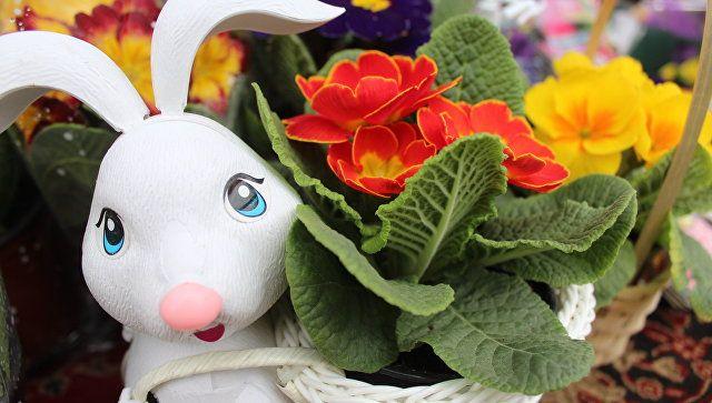 Более 130 тонн продукции: что покупали крымчане на ярмарке в Симферополе