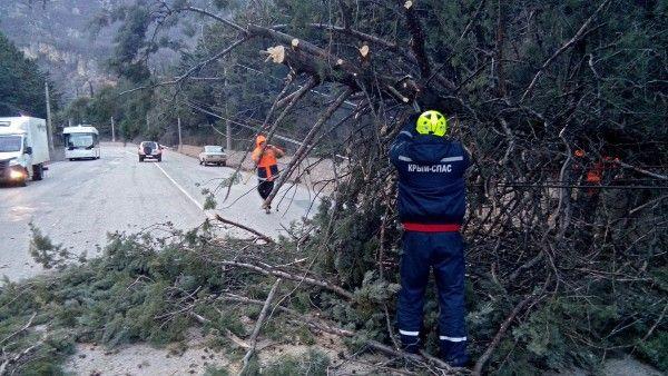 В Крыму падают деревья и разрушают дома