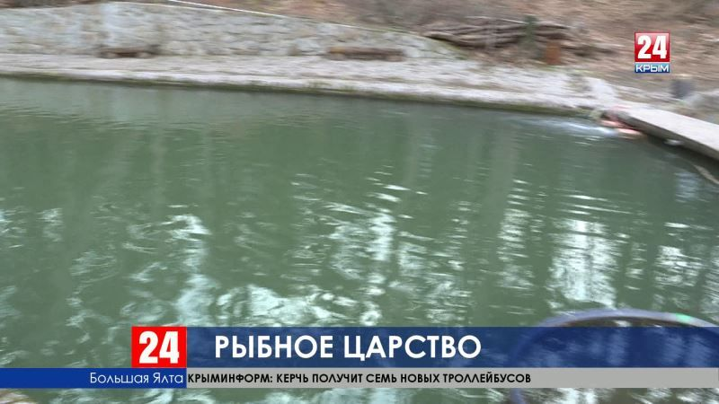Уникальный опыт. В Крыму выращивают форель и осетров в закрытом водоёме