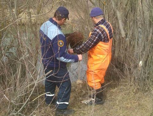 Крымские спасатели вытащили из реки лошадь