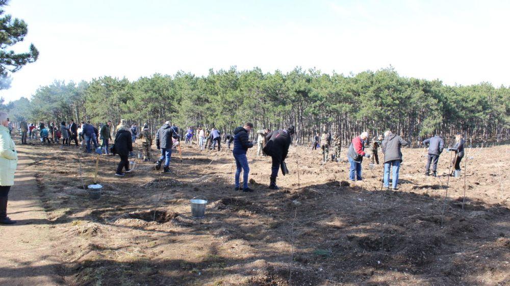 В костюмах и с пакетами на ногах: как чиновники сажали лес под Симферополем