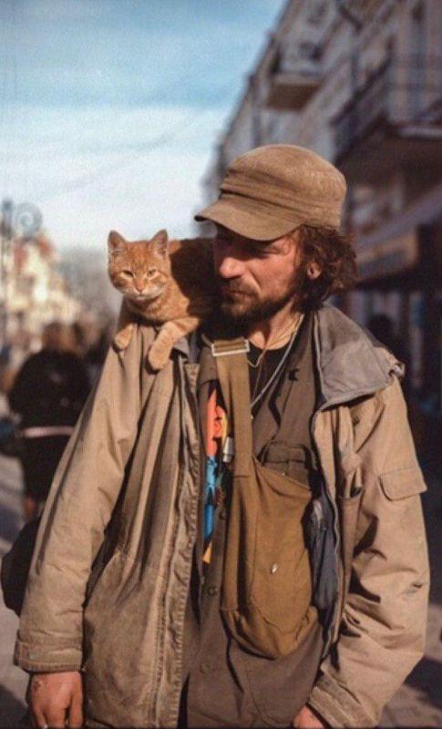 В Симферополе автомобилистка проехалась по спящему коту на пешеходной зоне в центре города