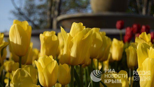 Фонтаны, скамейки, цветы: как Севастополь готовится к сезону