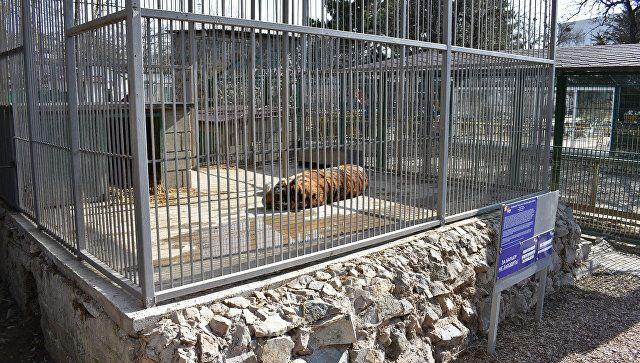 """Симферопольские львы, тигр и верблюд переедут в новые """"квартиры"""""""