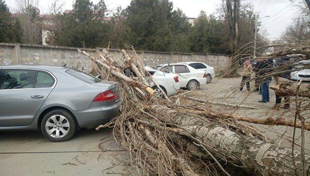 В Симферополе дерево рухнуло на машины