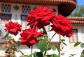 Мастер-класс Ханские розы состоится в Бахчисарайском музее-заповеднике