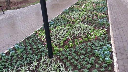 Зелёным насаждениям – уход и забота