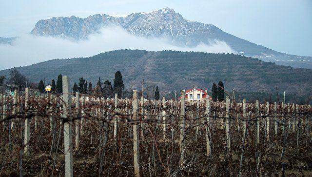 Защитить рядового винодела: Путин дал поручение правительству