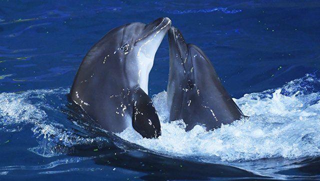 Последствия ЧП: алуштинские дельфины находятся в критическом состоянии