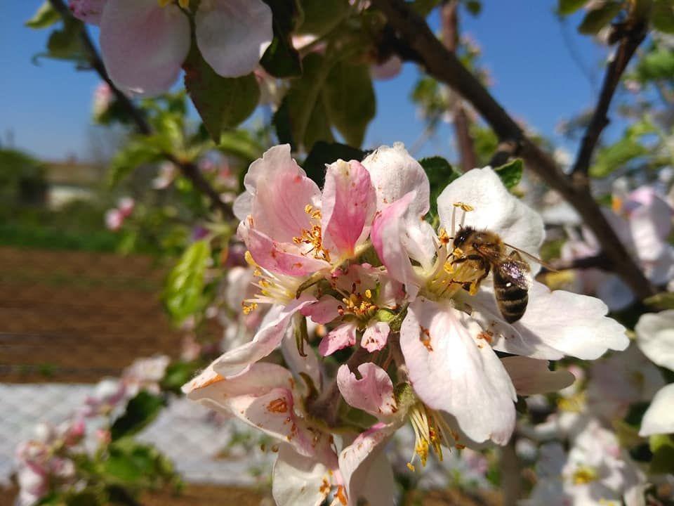 С начала 2019 года в Крыму площадь многолетних плодовых насаждений увеличена до 612 гектаров