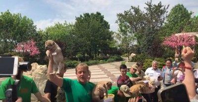 В Крыму родились львята Дональд и Владимир