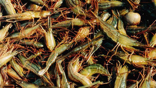 Только не креветки: Росприроднадзор на защите Ойбурского озера