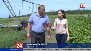 Вырастим крымское. В Республике увеличили площадь сельскохозяйственных земель и количество орошаемых полей
