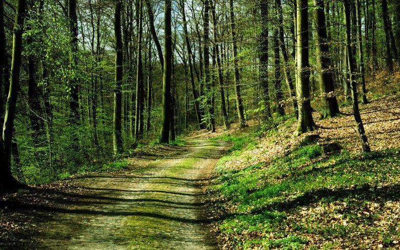 До 2021 года в Крыму высадят порядка 300 га леса