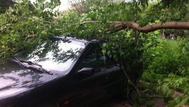 Крым в плену стихии: упавшие деревья, подтопленные дороги и ДТП