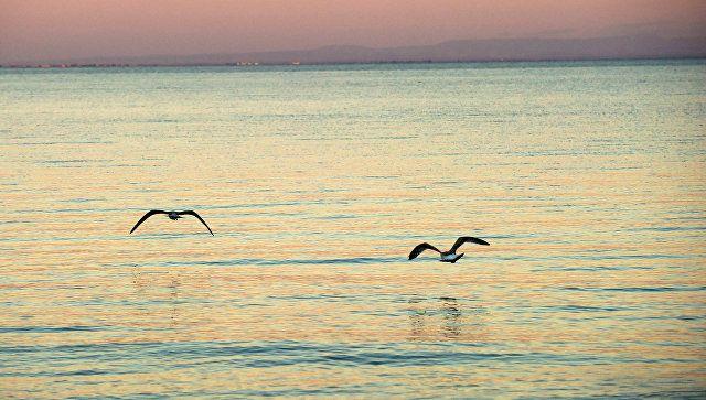 ЧП на диком пляже в Крыму: двоих детей унесло на матрасе в море