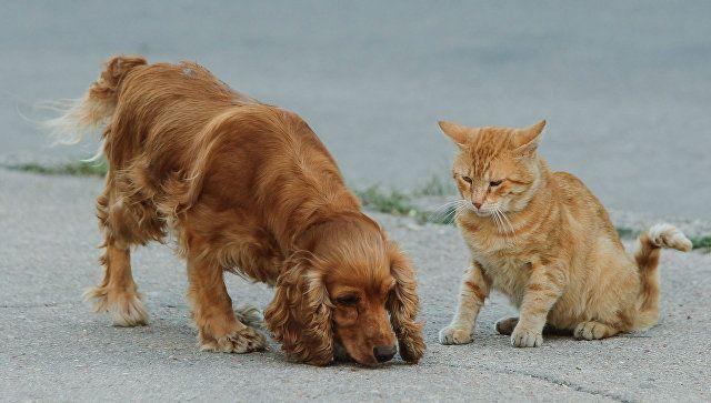 Для защиты животных: в Крыму предлагают создать зоопатруль