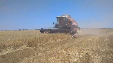 Виды на урожай: крымские аграрии приступили к уборке озимых зерновых культур