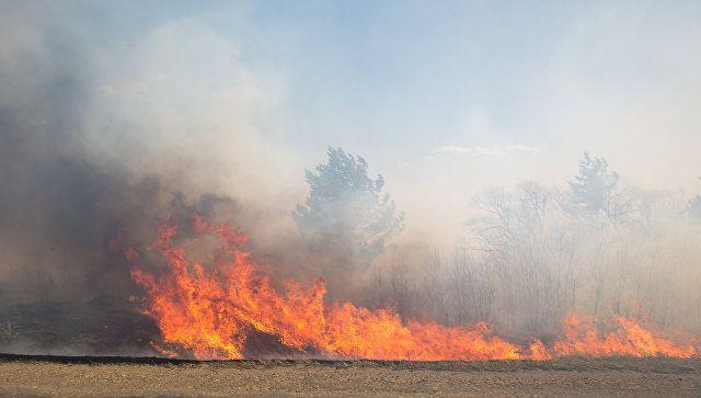Крымские спасатели потушили 8 гектаров пшеницы