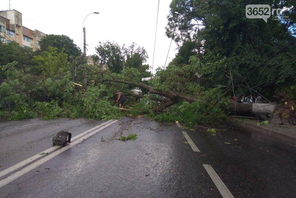Последствия непогоды: в Симферополе ураган повалил 26 деревьев и оборвал провода