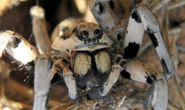 В Крыму постояльцев отеля перепугал огромный паук, поедающий мышь