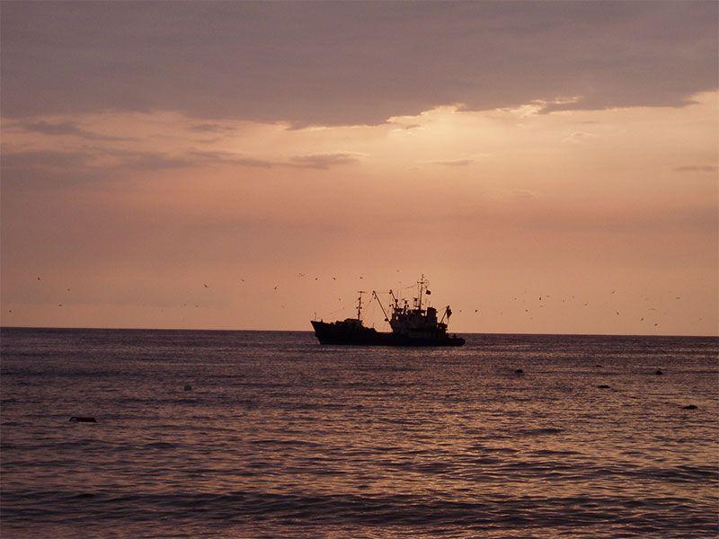 С 1 апреля пограничники Крыма провели свыше 900 рейдов по охране морских биологических ресурсов