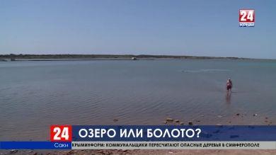 Сакское лечебное озеро граничит с болотом. Угрожает ли такое соседство жемчужине всесоюзной здравницы?