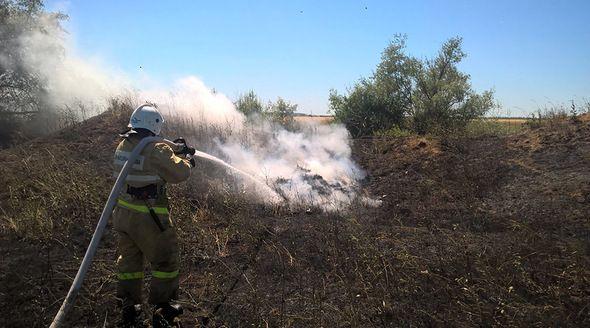 Огонь уничтожил гектар пшеницы в Кировском районе Крыма