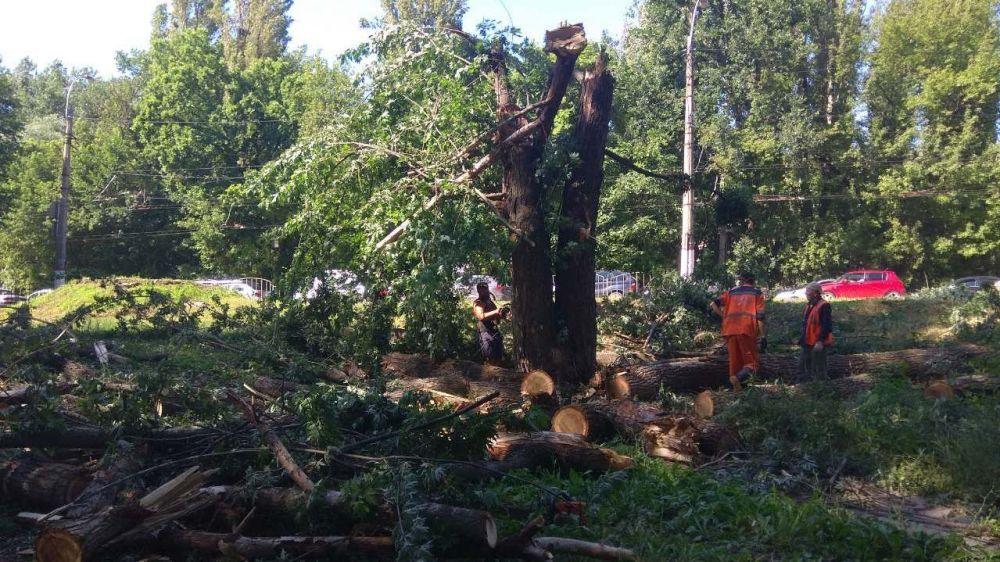 Наталья Маленко: «Пришло время обновлять деревья в городе»