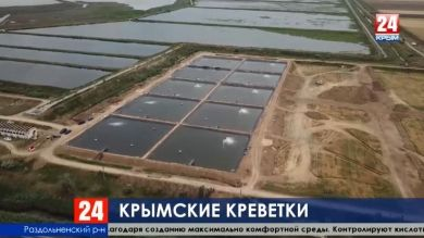 В Раздольненском районе появились первые в России интенсивные пруды для выращивания креветки