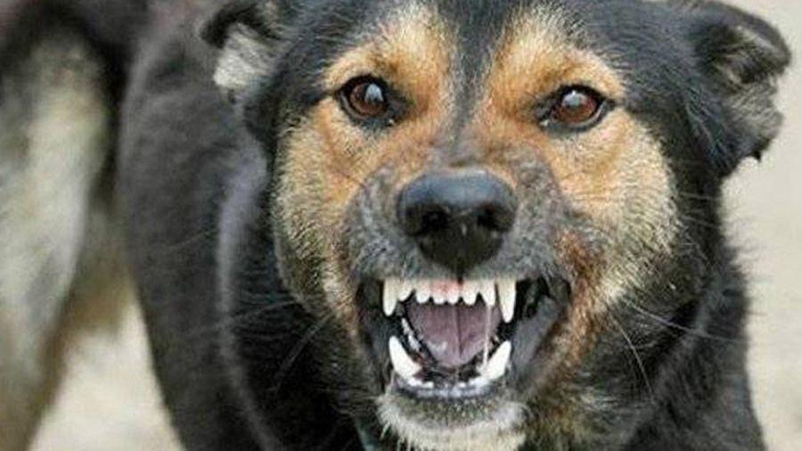 Случай бешенства собаки зарегистрировали в Сакском районе