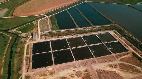 Первые в России интенсивные пруды для выращивания креветки запущены в Крыму