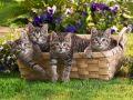 В Крыму бабушке выписали штраф за «продажу котят в особо крупных размерах»