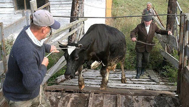 Неопознанные коровы и бараны: в Крыму обнаружили 1,5 тоны подозрительного мяса