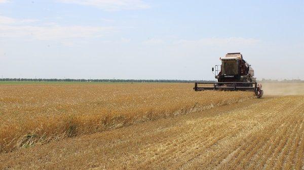 В Джанкойском районе идет к завершению уборка ранних зерновых и зернобобовых культур