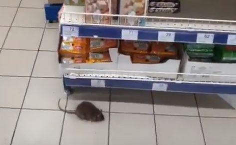 «Рататуй делает контрольную закупку»: по симферопольскому супермаркету бегают крысы