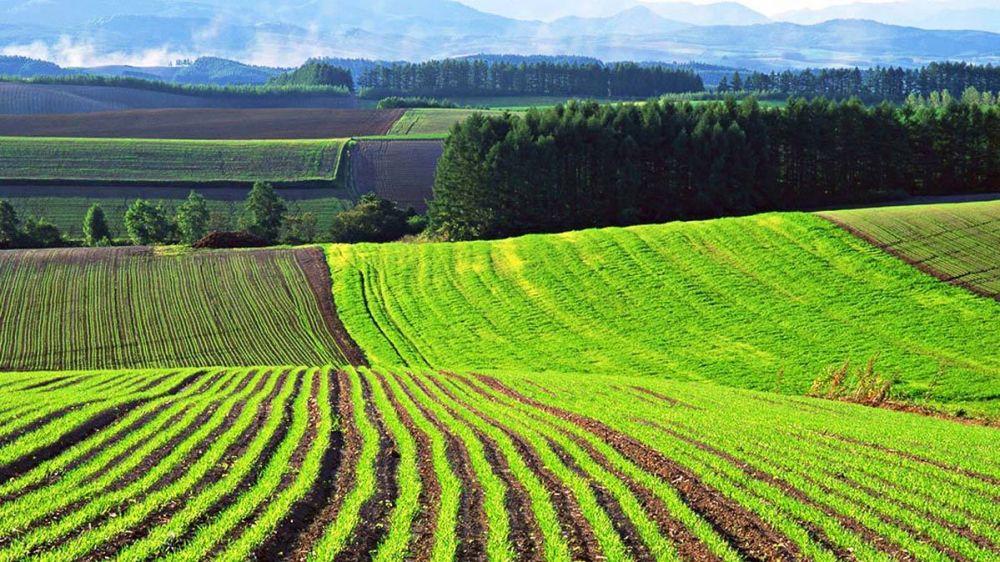 На торги в Крыму выставлены три земельных участка сельскохозяйственного назначения