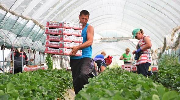 Зарплата аграриев Крыма выросла почти на 70% с 2015 года