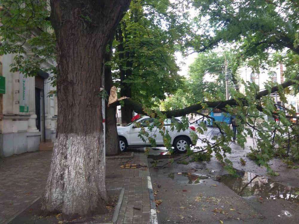 В Симферополе продолжают расчищать улицы от сломанных после урагана деревьев