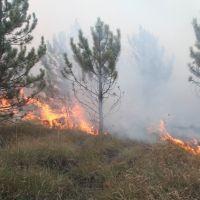 Локализован крупный лесной пожар в Белогорском районе