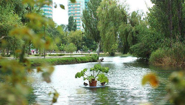 Пруд в Гагаринском парке Симферополя украсили плавающими клумбами