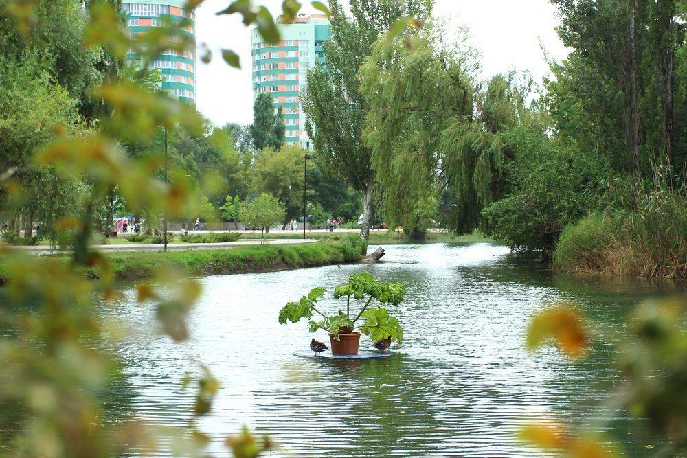 В симферопольском парке появились плавающие клумбы