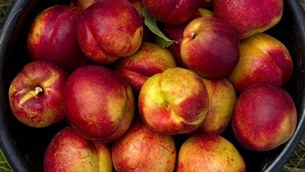 В России начали действовать новые правила ввоза фруктов и овощей