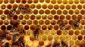 На начало 2019 года в республике во всех категориях хозяйств насчитывалось порядка 79 тысяч пчелосемей – Андрей Рюмшин