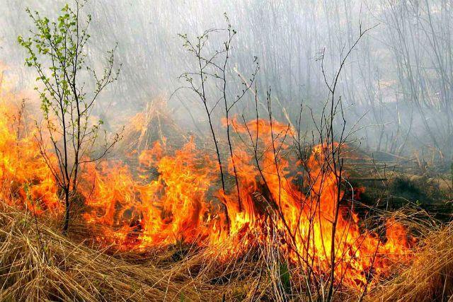 В Крыму объявлен режим чрезвычайной пожарной опасности