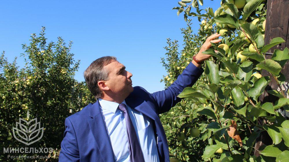 Андрей Рюмшин: Крымские аграрии собрали первый урожай яблок с 223 гектаров садов