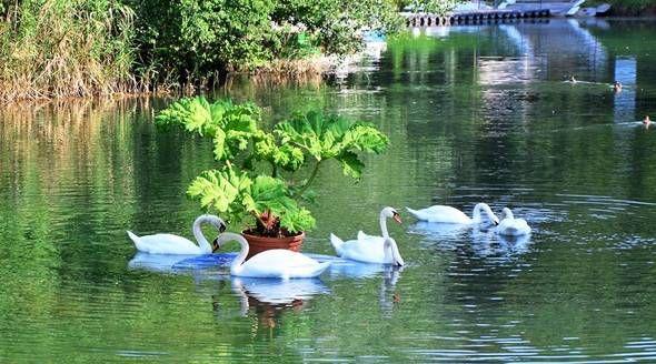 Плавающих клумб в пруду самого большого симферопольского парка станет больше