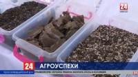 Крым будет поставлять подсолнечное масло в Индию, Сирию, Израиль, Китай